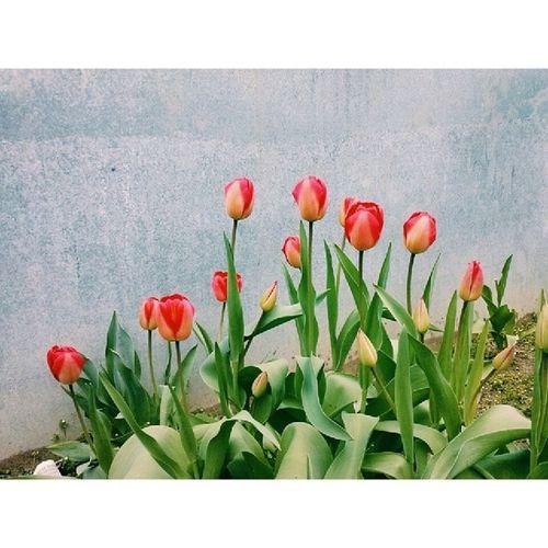 цветочныйспам VSCO Vscocam Flowers flowers_ inspires nature