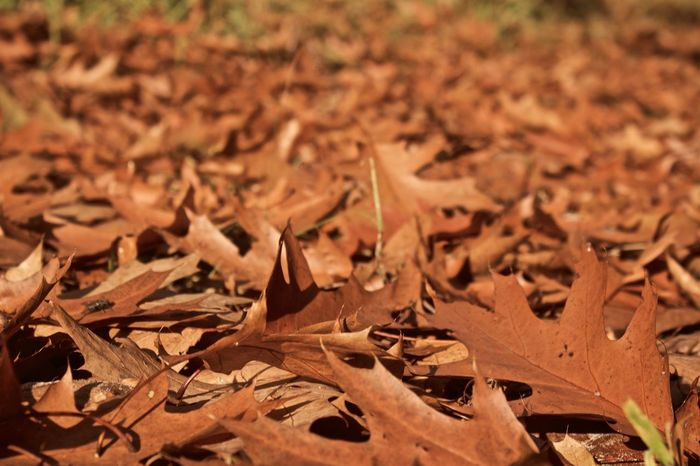 Autumn Autumn Colors Backgrounds Brown Lanaken Leaves Nature Nature_collection