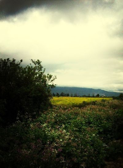 Campo En Quillota
