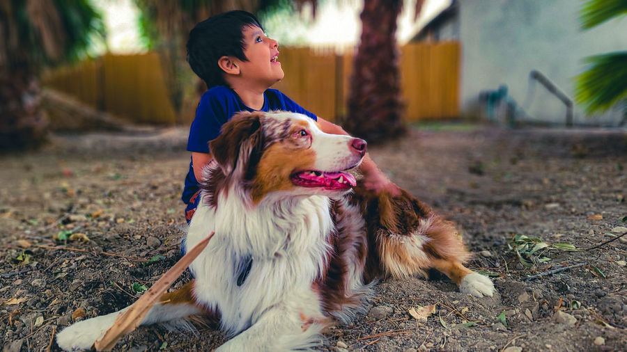 Portrait of a dog and a boy  looking away in the same direction.