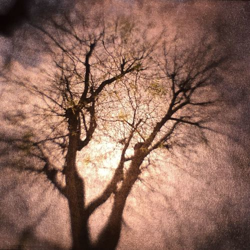 Spring time in Paris Bare Tree Lumigraphe Hybrid Camera Obscura Camera Obscura Tree Paris