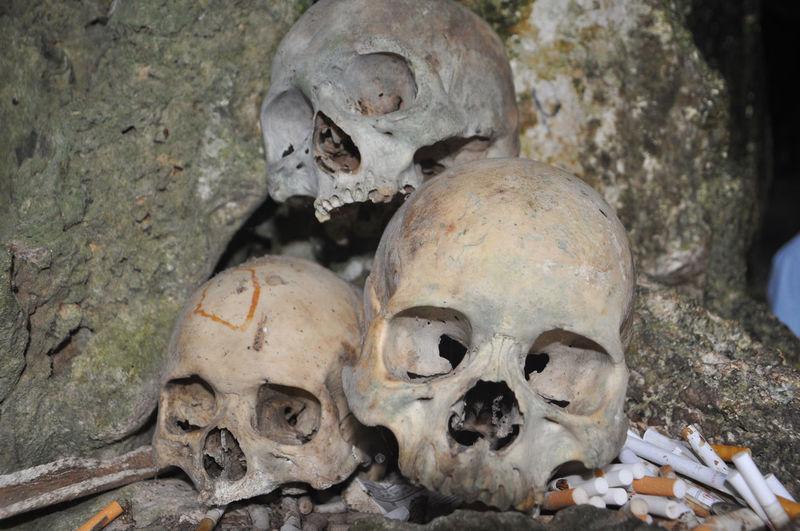 The skulls of