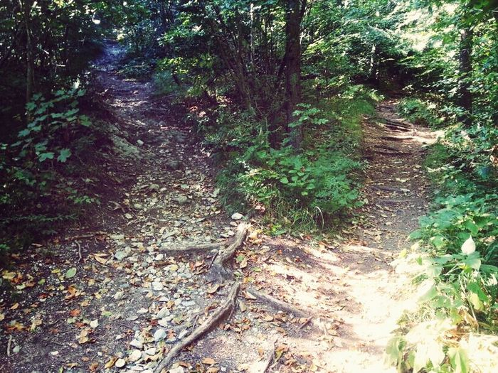 Wich Way To Choose? Wich Way??? Forest