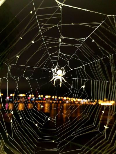 Close-up of spider web at night