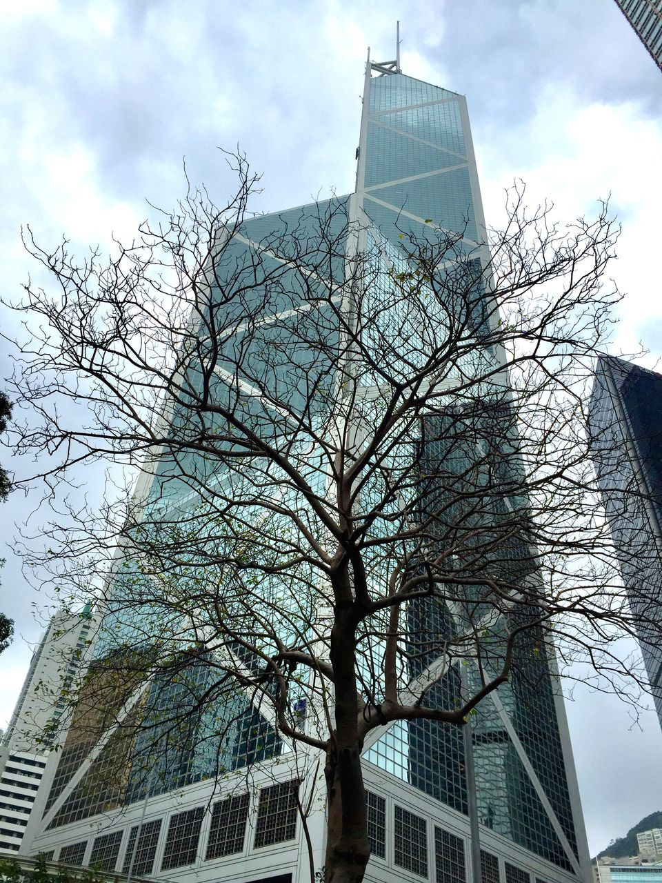 LOW ANGLE VIEW OF BARE TREE AGAINST MODERN BUILDINGS