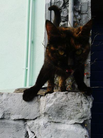 Street Cat Winning Cat Black Cat Beauty Needy Animals Islandlife Saomiguelportugal