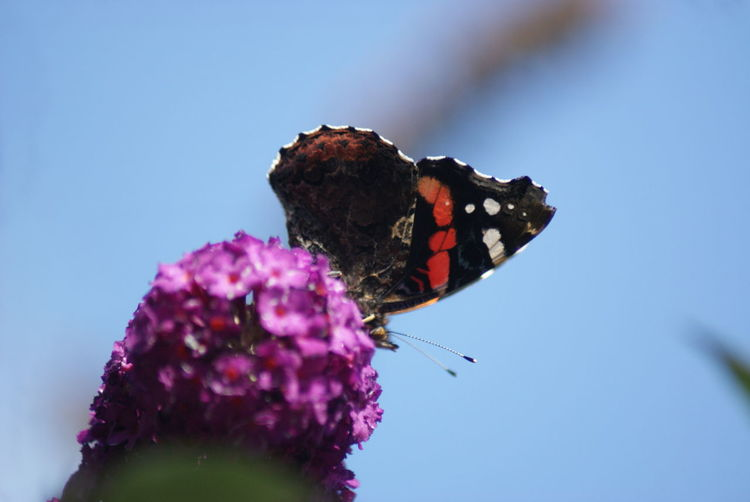 CLOSE-UP OF Butterfly On FLOWER AGAINST BLURRED BACKGROUND