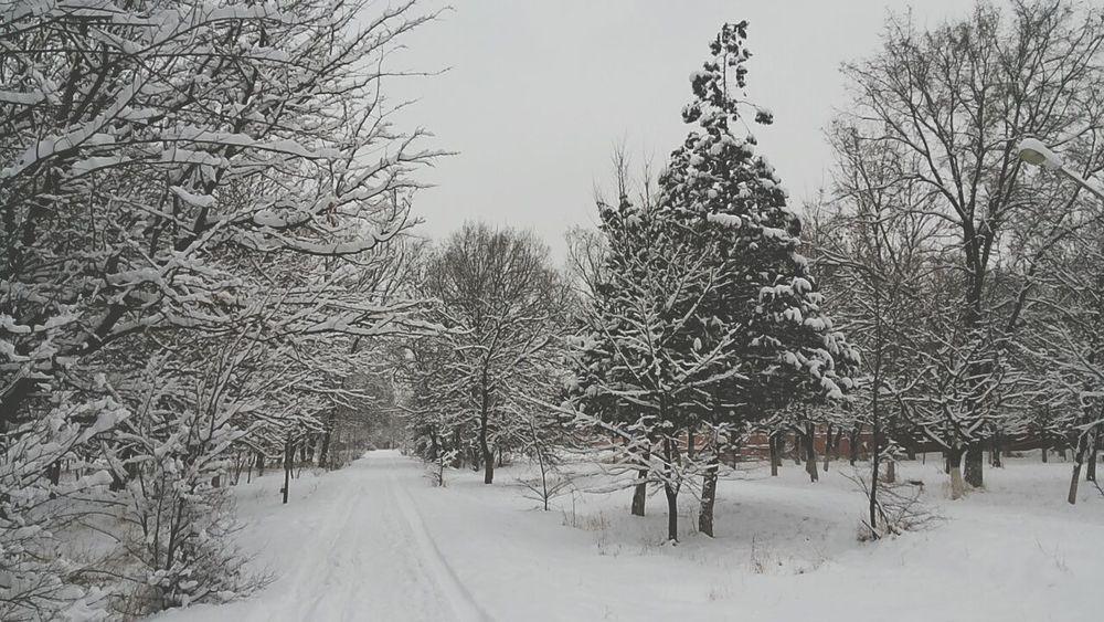 тропинка в парке Погода пейзаж и природа снег Снежный парк Тараз