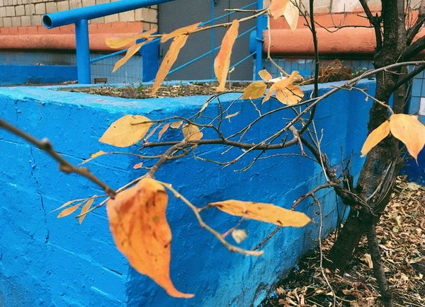 Autumn Colors Autumn Autumn Leaves Autumn🍁🍁🍁 Autumn Collection Autumn Colours Blue Leaves Building Old Buildings Moscow