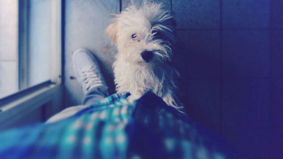 Dog Dog❤ Blue Photography NikonD3100 Bit