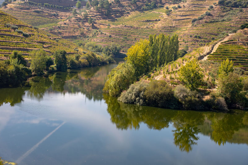 Tree reflection in Douro river with vineyards in background Beauty In Nature Day Forest Green Color Growth Idyllic Lake Nature No People Non-urban Scene Outdoors Plant Reflection River Riverbank Scenics - Nature Tranquil Scene Tranquility Tree Water Waterfront