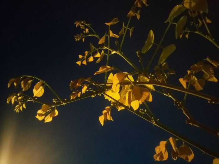 Moon Yellow Gold Colored Leaf No People Gold Close-up Night Backgrounds Outdoors Golden Leaves Low Light Photography Night Scene Nature Beauty In Nature Avenue Tree Branches