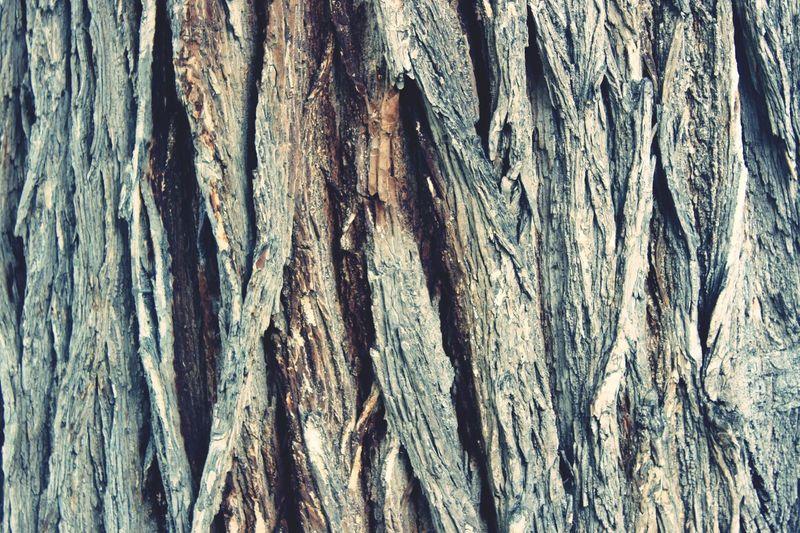TreePorn Trees Tree Bark Texture Pattern Nature Vintage