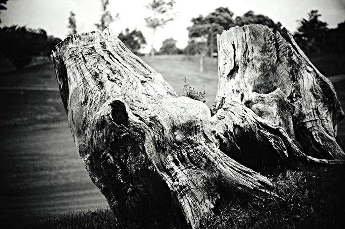 Snapshot Nature Monochrome OpenEdit EyeEm Carl Zeiss Jena Sonnar