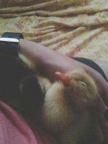 Yerim sizi been Duck Ducks Duck Face Donald Duck