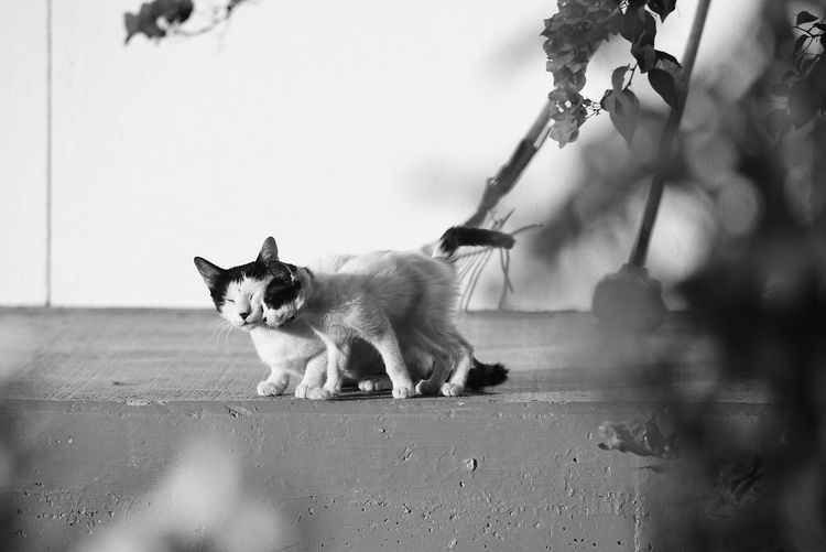 Cats Four Legs And A Tail Animals Kitty Neko Pets Corner Blackandwhite