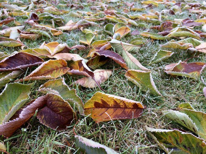 Colourful autumn life Autumn Autumn Colors Autumn Foliage Beauty In Nature Close-up Colourful Nature Colours Of Autumn Colours Of Life Colours Of Nature Leaf Leaves Nature No People Outdoors Plant Senescence