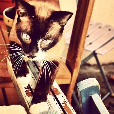 Chelsea bébé ❤️ Chelseabébé Garden Cat Catlover