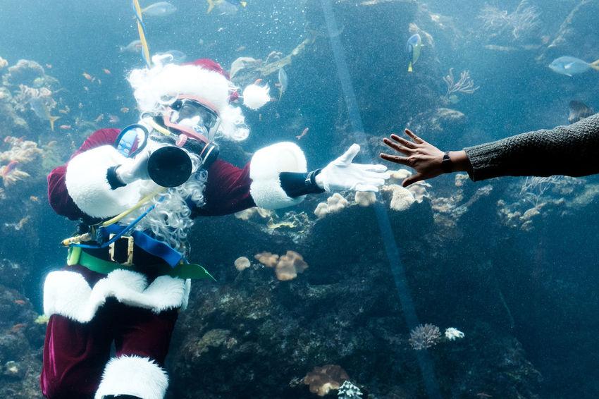 Santa Santa Claus Christmas Costume Aquarium Museum Streetphotography Street Photography San Francisco California Underwater Water Scuba Diving Real People UnderSea Leisure Activity Two People Scuba Diver