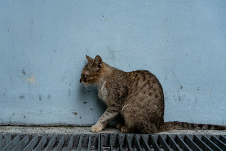Cat sitting on wall