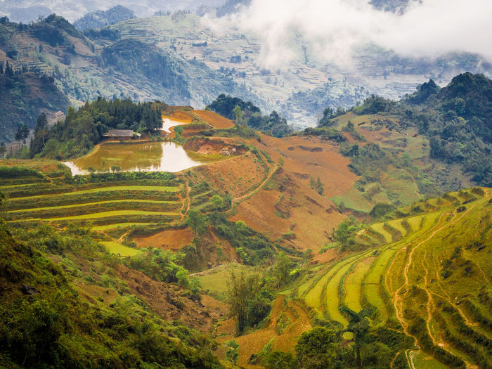Rice terraces and small lake and the house in the mountains of north Vietnam Agriculture Beauty In Nature Clouds Day Field Landscape Mountain Nature No People Outdoors Patchwork Landscape Rice Paddy Rural Scene Scenics Sky Terraced Field Tranquil Scene Tranquility Tree Vietnam