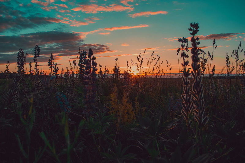 Sky Plant Sunset Cloud - Sky Beauty In Nature Growth Nature Field Tranquility Land No People Tranquil Scene Scenics - Nature Orange Color Environment Landscape Outdoors Non-urban Scene Rural Scene Grass