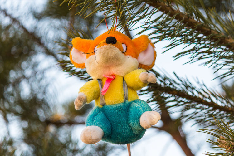Low Angle View Of Stuffed Toy Hanging On Tree
