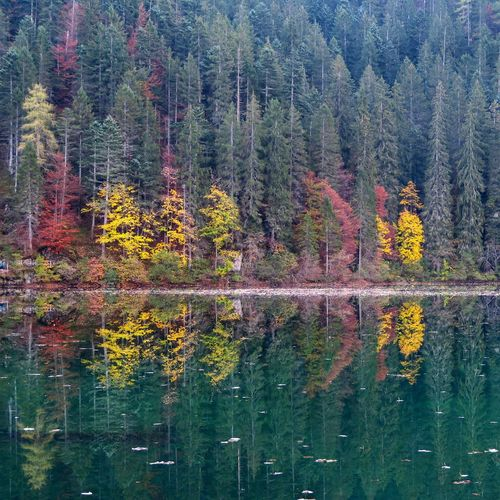 Trees Beauty In Nature Outdoors No People Multi Colored Nature Nature_collection Water Lake Lake View Lakeshore Scenics Fall Beauty From My Point Of View Fall Colors October Lago Di Tovel Trentino Alto Adige Getting Inspired Taking Photos Amazing View Water Reflections Colors Alps