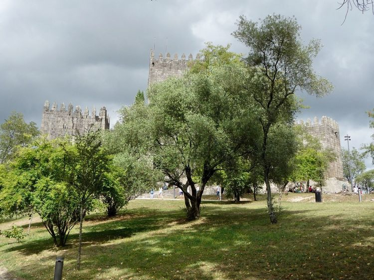 Tree Growth Nature Sky Outdoors Cloud - Sky Beauty In Nature No People Day Architecture Olive Tree Castle Guimarães Portugal