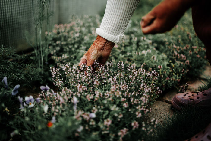 Body Part Care Day Finger Flower Flowering Plant Freshness Gardening Growth Hand Holding Human Body Part Human Hand Human Limb Land Lifestyles Nature One Person Outdoors Plant Planting Real People Selective Focus