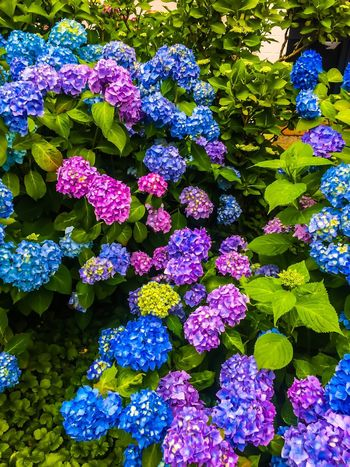 Flower Collection Nature Nature Photography Flower Flowering Plant Beauty In Nature Fragility Vulnerability  Freshness Plant Nature Growth Plant Part High Angle View Green Color Full Frame Inflorescence Outdoors Flower Head Petal No People