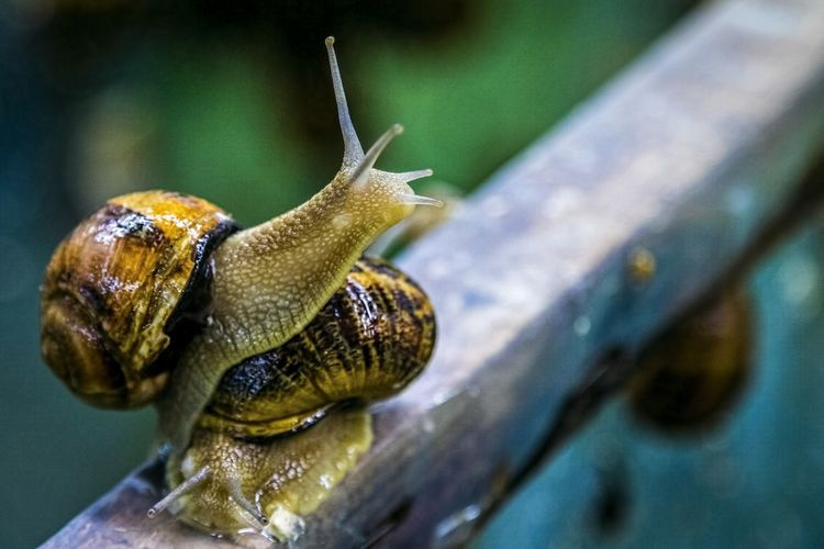 Close-Up Of Snails On Railing