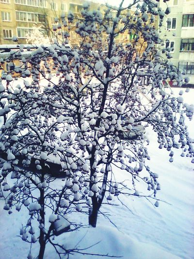 Winter Beauty In Nature Snow Day Nature Cold Temperature Outdoors No People First Eyeem Photo