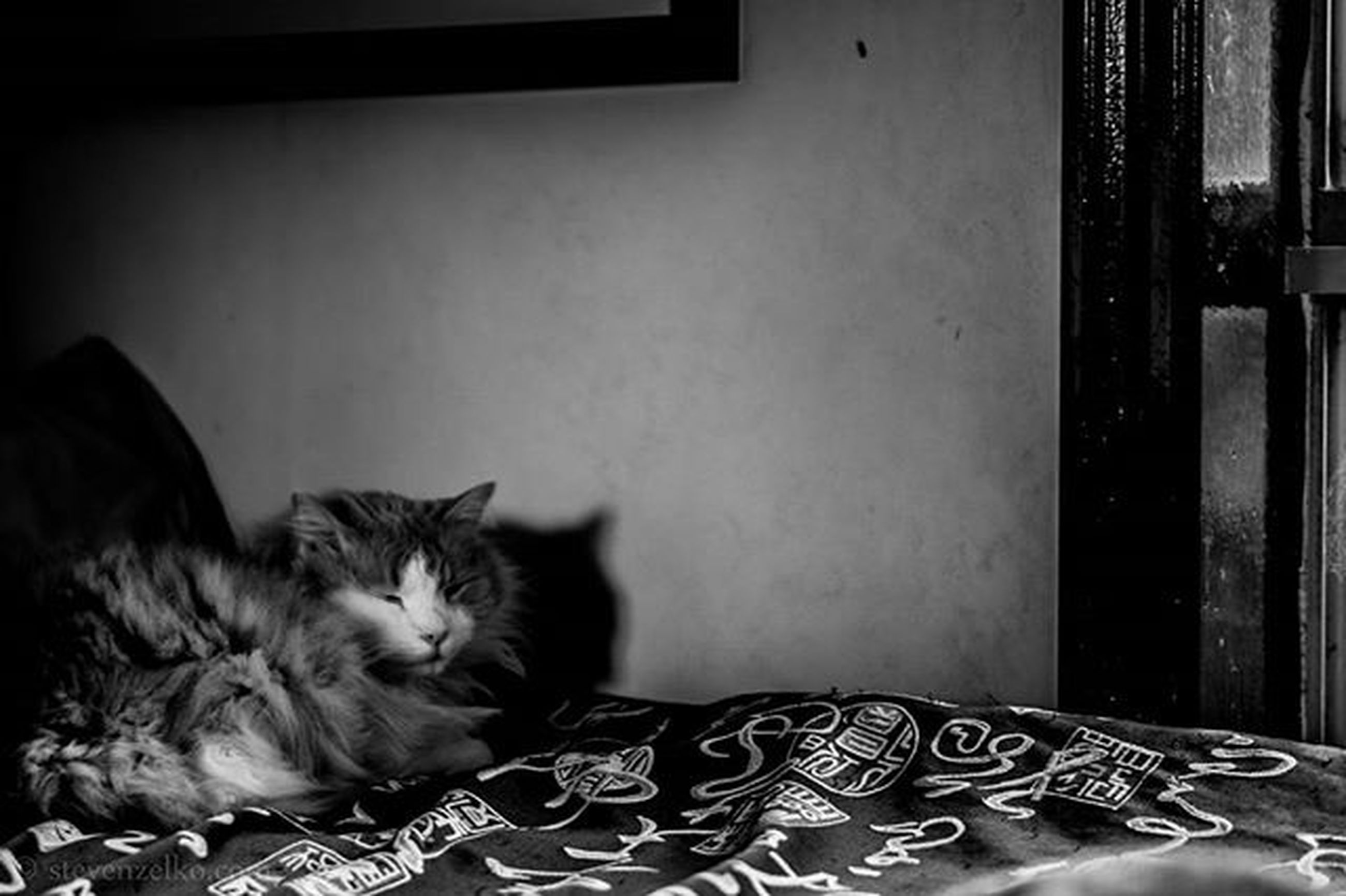 pets, domestic animals, indoors, domestic cat, animal themes, cat, mammal, one animal, relaxation, home interior, feline, lying down, resting, bed, sleeping, home, house, whisker, window, wall - building feature