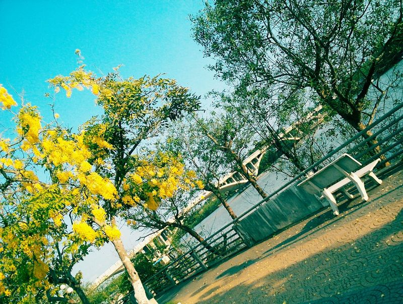 Tree Sky Day No People Low Angle View Growth Sunlight Nature Green Color Outdoors Close-up Beauty In Nature Viet Nam Sunnyday 🌸🌷🌿 Bymyphone Beauty In Nature Water Nature