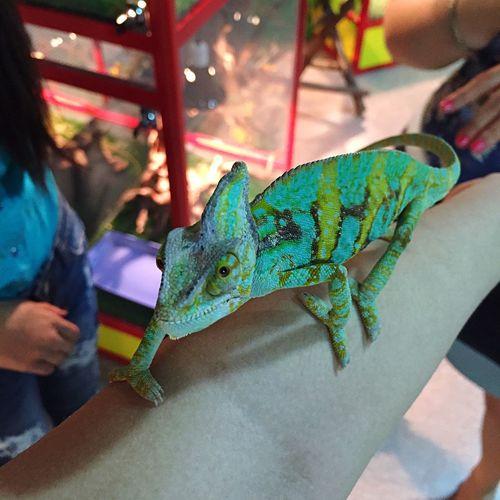 Chameleon Good Day Lucky Me