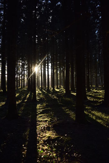 Twannberg, Switzerland, 2016. Backlight Beauty In Nature Forest Landscape Light And Shadow Nature Shadows Switzerland Tranquility Trees Twann Safehaven Safe Space