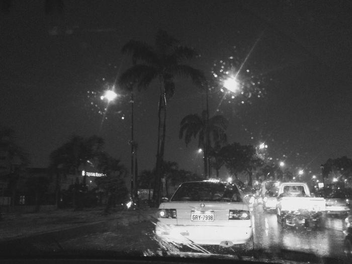 Palm Tree Rain
