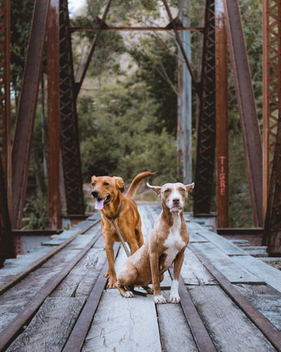 Dogs on footbridge in city