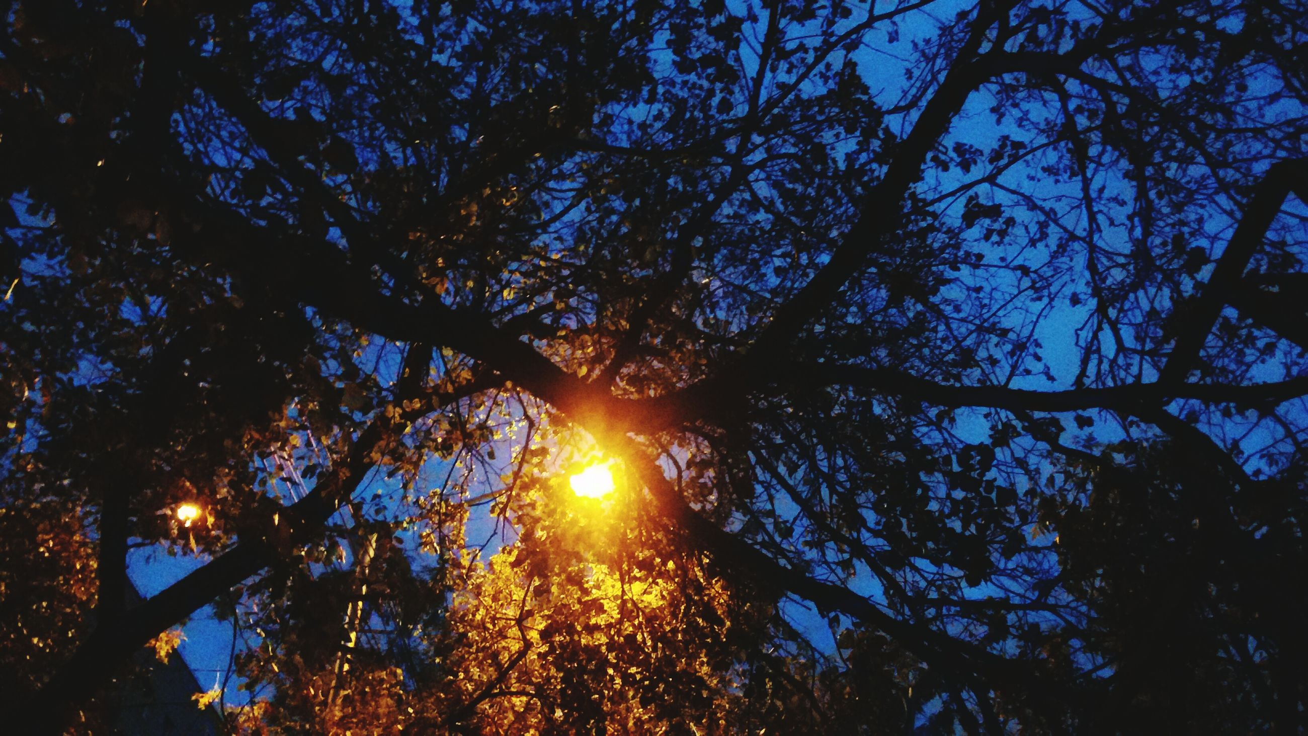 tree, low angle view, branch, growth, sun, nature, tranquility, beauty in nature, sunlight, sunbeam, sky, silhouette, scenics, lens flare, back lit, glowing, outdoors, no people, tree trunk, illuminated