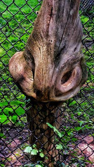 nose#