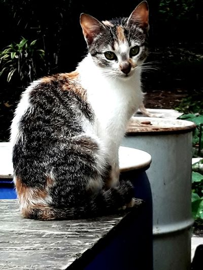 Pets Water Sitting Domestic Cat Feline Portrait Animal Themes