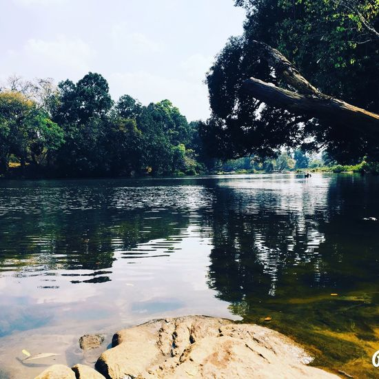 First Eyeem Photo Street Light Water Tree Lake Nature Reflection Beauty In Nature Scenics Tranquility No People Tranquil Scene Day Outdoors Growth Sky Swimming Bird