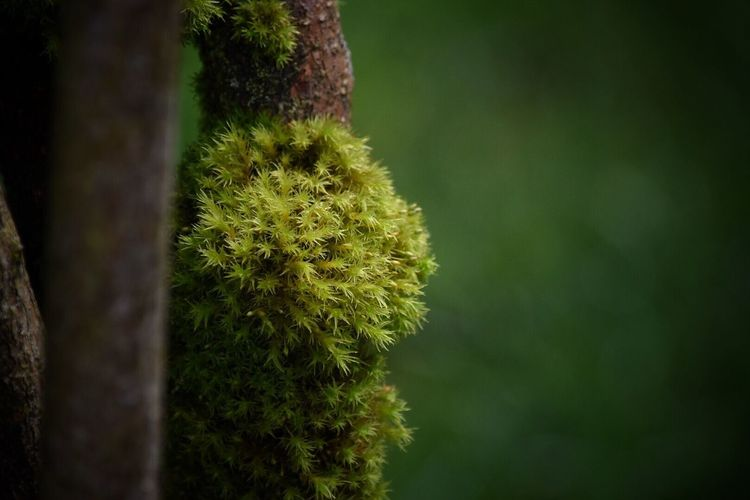 Nature Growth Green Color Close-up No People Tranquility Plant Beauty In Nature Day Outdoors Grass Moss Moss & Lichen Tree Mossy Green Color Spring Springtime Beauty In Nature Growth Freshness Plant Nature
