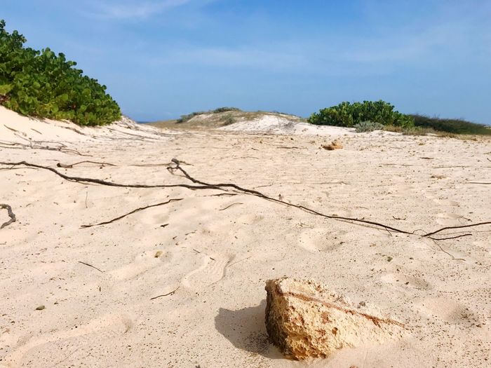 Aruba Arikok National Park Antilles Caribbean Sand Nature Day Outdoors No People Landscape Beach Arid Climate Tree Sky Beauty In Nature Sand Dune Close-up