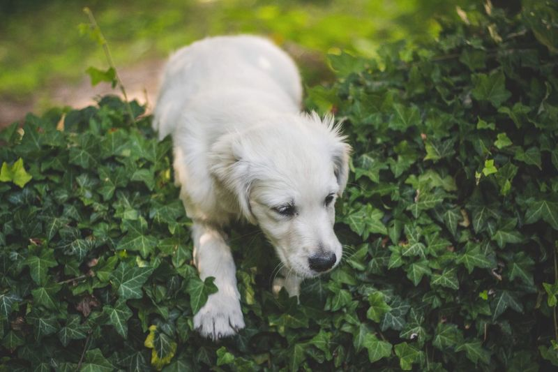 One Animal Mammal Animal Themes Domestic Pets Dog Canine Green Color Animal Domestic Animals Nature Leaf Plant Vertebrate High Angle View No People Day Plant Part Growth Outdoors