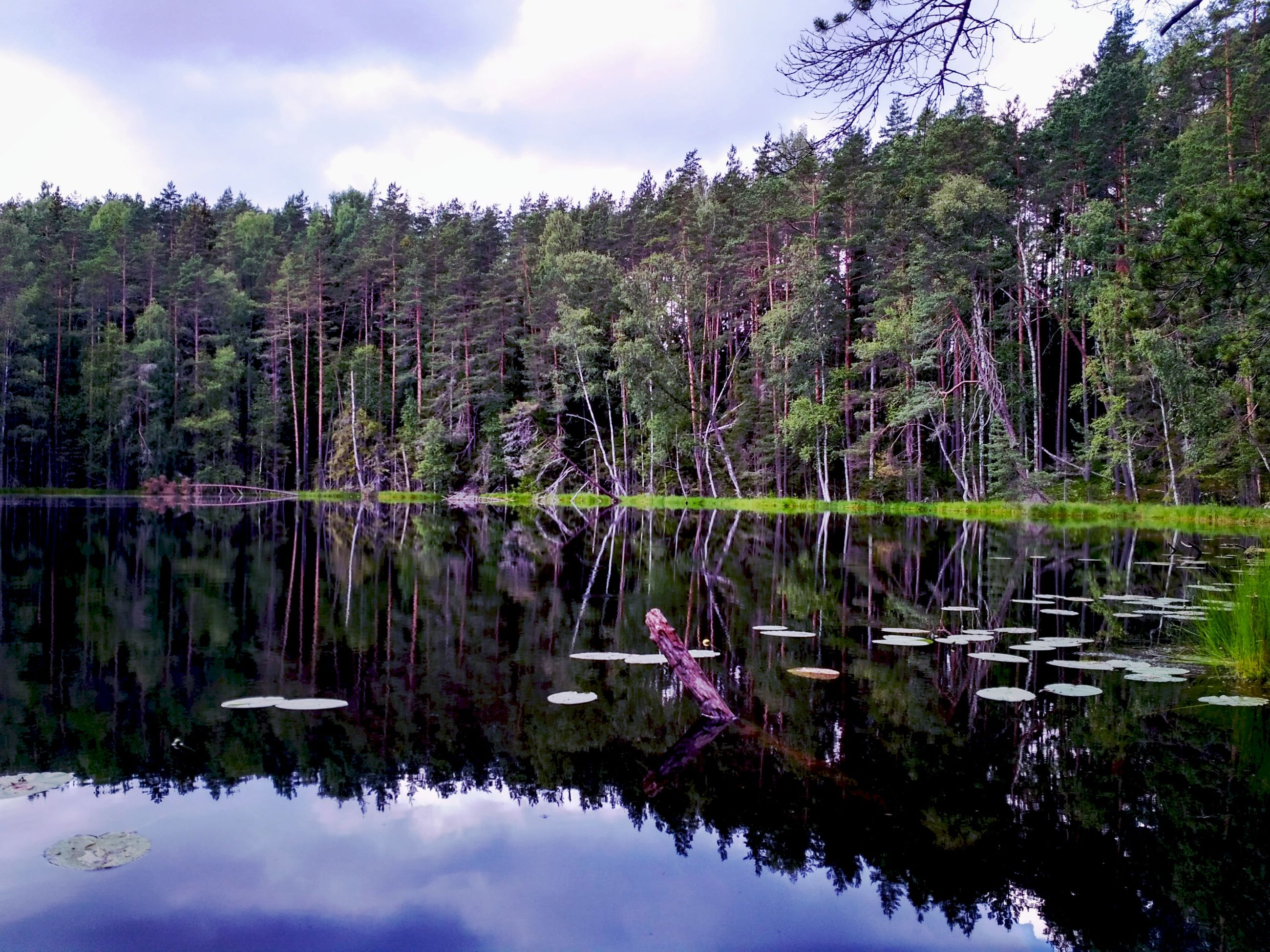 nature, tree, water, sky, beauty in nature, lake, outdoors, reflection, tranquility, scenics, day, growth, tranquil scene, waterfront, no people, cloud - sky, animals in the wild, forest, swan, bird, animal themes