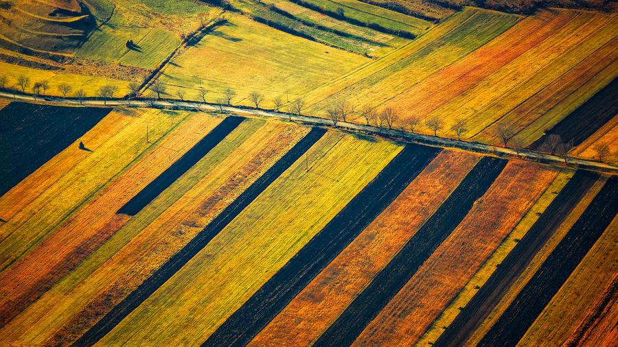 Autumn Fields Aerial View Agriculture Autumn Autumn Colors Backgrounds Beauty In Nature Composition Day Farm Field Full Frame Grass Landscape Layers Lines Nature No People Outdoors Piatra Secuiului Road Romania Rural Scene Scenics Trees Warm The Great Outdoors - 2017 EyeEm Awards The Great Outdoors - 2017 EyeEm Awards Neighborhood Map Live For The Story The Great Outdoors - 2017 EyeEm Awards Perspectives On Nature