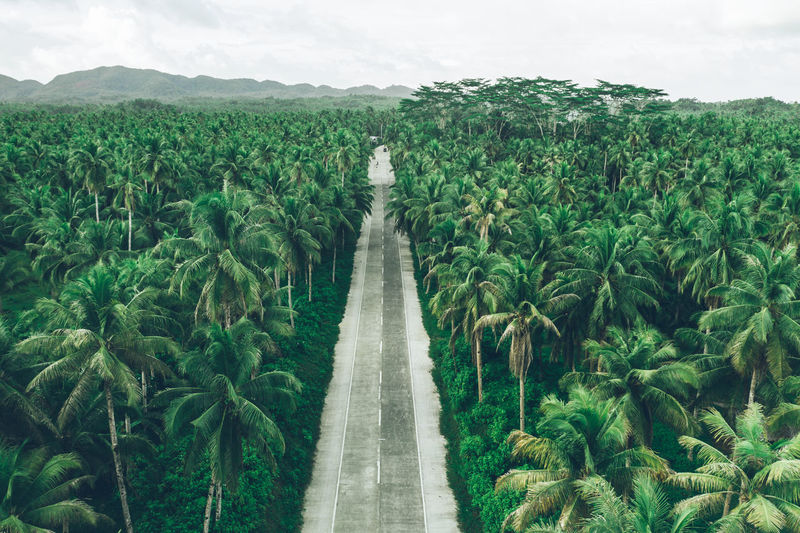 Aerial view of tropical trees on land