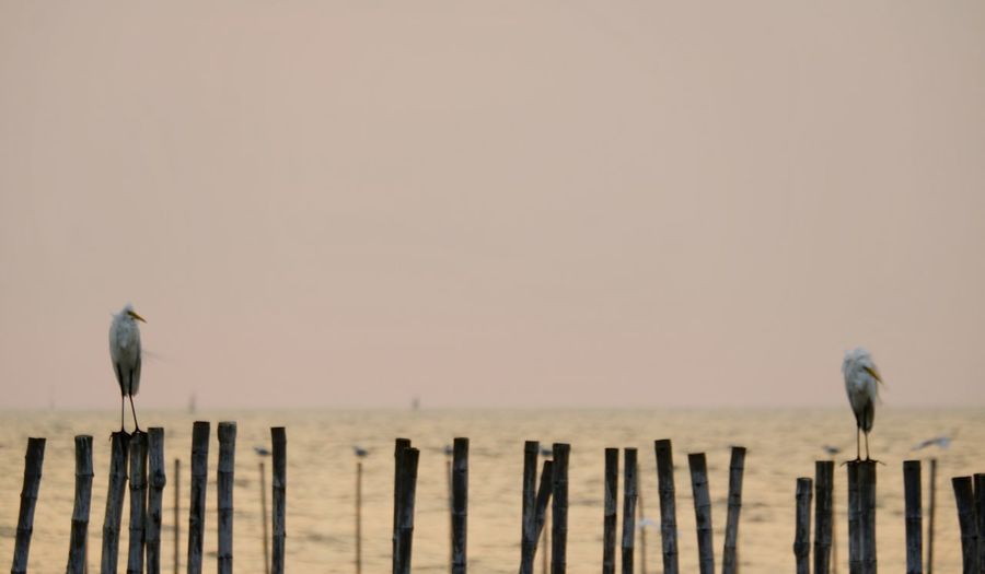 Seagull perching on wooden post in sea against sky